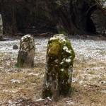 février 2012          Les pierres qui poussent - Eppeville